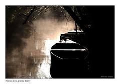 Entre ombre et lumière (Bruno-photos2013) Tags: brume foggy marais paysage landscape bretagne brouillard brunolandry barque monochrome saintlyphard brière