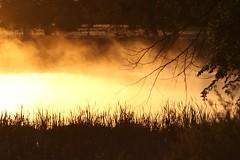 June 11, 2019 - Misty morning. (Bill Hutchinson)