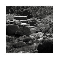 Stone Garden at the Botanical Garden, Aarhus (DK) (K.Pihl) Tags: park bw 6x6 film monochrome analog mediumformat blackwhite stones schwarzweiss rodinal150 aarhus hasselblad500cm kodaktrix400 mittelformat sonnar150mmf40 pellicolaanalogica