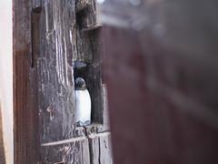 Penguin (INZM.) Tags: 南葉亭 カレー スープカレー スープカリー 葉山 逗子 秋谷 ランチ lunch nanyoutei curry soupcurry dinner hayama zushi yokosuka shonan 肉食セット ペンギン penguin japan japanese food japanfood japanesefood