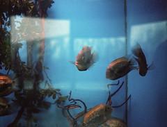 FRB No. 43 - Kodak Portra 400 - Roll No. 4 (Alex Luyckx) Tags: quebeccity quebec canada trip vacation travel roadtrip quebecaquarium aquariumduquébec sea ocean river lake aquarium creatures fish filmreviewblog filmreview review media medium minolta maxxum9 minoltamaxxum9 slr 35mm minoltamaxxumaf50mm117 kodak kodakportra400 portra portra400 asa800 c41 colour colournegative burlingtoncamera nikoncoolscanved adobephotoshopcc film filmphotography believeinfilm filmisalive filmisnotdead