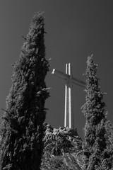 Ciprés y cruz. (kum111) Tags: ciprés cruz religión dios jesús valledeloscaídos blancoynegro bw cypress croix cross god españa spain espagne spanien espanya guerraciviil guerracivil franco religion madrid