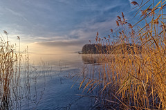 Morning at the lakeshore (Tjaldur66) Tags: lake lakeshore morning morninglight morningmood sunrise tranquility peaceful landscape scenery hallwilersee seengen aargau switzerland reed