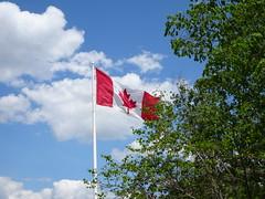 Canadians salute Toronto Raptors, the 2019 NBA Champions! (Trinimusic2008 -blessings) Tags: trinimusic2008 judymeikle nature flag canadian proudtobeacanadian gratitude nbachampions june 2019 toronto to ontario canada