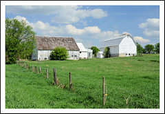 Whitewashed Michigan Barns Behind the Fenceline (sjb4photos) Tags: michigan brooklynmichigan farm barn fence fencefriday hff jacksoncounty
