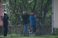 Dan B och Johan P letar Pollyglottsånare (Hans Olofsson) Tags: bird fågel fågelar fåglar natur nature ottenby rödbena sweden öland