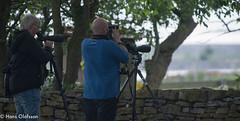 Dan B och Johan P letar Pollyglottsånare (Hans Olofsson) Tags: bird fågel fåglar natur nature ottenby sweden öland dan johan