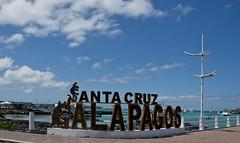 Galápagos Adventures (Simon Caunt) Tags: southamerica nature wildlife unesco galapagos naturereserve unescoworldheritage naturalworld equador galápagos galapagosmarinereserve galapagosarchipelago gadventures 240700mmf28nikkor pacificarchipelago nikon d800 nikondslr nikoncameras nikond800 afsnikkor2470mmf28 caunt ©simon