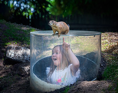 Mommy....Look! (Modymark) Tags: groundhog bronxzoo child family park zoo