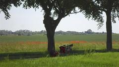 Radfahrer und Mohnblumen (Carl-Ernst Stahnke) Tags: altefähr feld mohnblumen radfahrer pause erholung schatten alleebäume