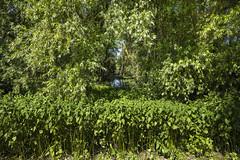 Vert  tout (JiJi-aime) Tags: arbres feuillage couleur unique dominante