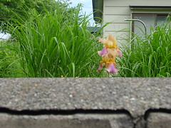 Have a nice day (しまむー) Tags: sony cybershot dscs70 s70 carl zeiss variosonnar 721mm f2
