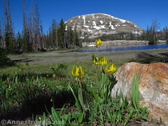 Hope Lake (annestravels2) Tags: ibantiklake utah uintamountains lake mountains wildflowers glacierlilies