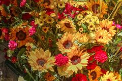 a bucket full of summer (petermüller21) Tags: summer flowers colours girona spain 2019