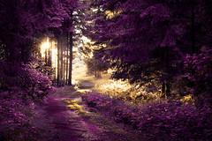 Rund um den Bilstein (janeway1973) Tags: bilstein hessen germany deutschland natur nature wald forest forst trees bäume sundown sonnenuntergang sunshine sonnenschein lichtstrahlen lightrays glow glühen leuchten whitebalance weisabgleich purple orange lila