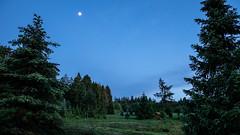 Rund um den Bilstein (janeway1973) Tags: bilstein hessen germany deutschland natur nature wald forest forst trees bäume moon mond dunkel dark hut hütte meadow wiese