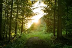 Rund um den Bilstein (janeway1973) Tags: bilstein hessen germany deutschland natur nature wald forest forst trees bäume sundown sonnenuntergang sunshine sonnenschein lichtstrahlen lightrays glow glühen leuchten