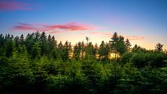 Rund um den Bilstein (janeway1973) Tags: bilstein hessen germany deutschland natur nature wald forest forst trees bäume sundown sonnenuntergang fichten conifers gegenlicht backlighting