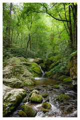 Smoky Mountains, TN (adamwilliams4405) Tags: water river forest trees park mountains green waterfall canon tennessee landscapes nature summer explore outdoors outside tones appalachia appalachian hike rocks