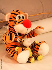 2019 week 7 ([peter::mceachern]) Tags: dogwood52 photography tigger cuddly toy