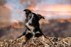On the top (Flemming Andersen) Tags: sky dog bordercollie outdoor hund animal pet frisbee