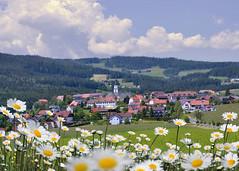 Mein liebes Heimatdörfchen (Mariandl48) Tags: wenigzell blumen margeriten ort dorf steiermark austria