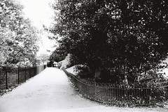 Kensington Gardens (goodfella2459) Tags: nikonf4 afnikkor24mmf28dlens ilfordpanfplus50 35mm blackandwhite film london path trees fence gardens park kensingtongardens bwfp