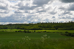 """How Green is My Valley"" (Seppo53) Tags: finland palojoki summer landscape field forest grass sky tree clouds green midsummer flora plants natureinfocusgroup"