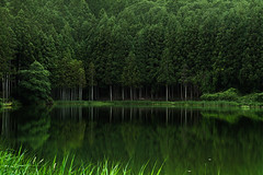 Reflection of Forest (HarQ Photography) Tags: panasonic lumix s1r sigma art50mmf14dghsm landscape pond forest green reflection japan nara 龍王ケ淵 happyplanet asiafavorites