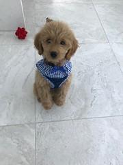 Sophie says hi