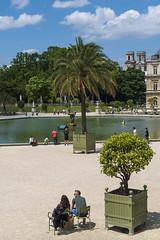 France - Paris - Le Luxembourg - le palmier (jeanlouispoirierphotographie) Tags: france jardin parc palmier bassin