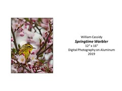 "Springtime Warbler • <a style=""font-size:0.8em;"" href=""http://www.flickr.com/photos/124378531@N04/48062046072/"" target=""_blank"">View on Flickr</a>"