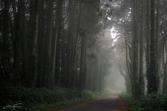 Misty forest road (jorgeverdasca) Tags: portugal sintra forest mist fog road path woodland landscape spring nature goth ivy
