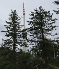 Sendeturm zwischen Wipfeln auf dem Gipfel - Hornisgrinde-Wanderung (Schwarzwald) (thobern1) Tags: hornisgrinde schwarzwald blackforest foretnoir germany nordschwarzwald