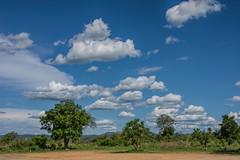 Нацпарк Микуми (Oleg Nomad) Tags: африка танзания микуми сафари парк africa tanzania mikumi park safari travel