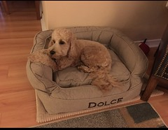 Dolce in her bed
