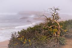 Ebb and Flow (buffdawgus) Tags: canonef24105mmf4lisusm california sanmateocountycoast sanmateocounty landscape pigeonpoint marinelayer pacificocean topazstudio lightroom6 fog californiacoast foggyday pacificcoast canon5dmarkiii seascape