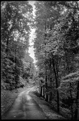 single lane roadway, tall trees, backlit, Lakey Gap Heights, Black Mountain, NC, Olympus XA, Foma Retropan 320, HC-110 developer, 6.10.19 (steve aimone) Tags: road roadway singlelane mountain talltrees backlit lakeygapheights blackmountain northcarolina olympusxa fomaretropan320 hc110developer 35mm 35mmfilm film blackandwhite monochrome monochromatic compactcamera