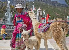 Old Lady and the Alpacas - Chivay, Peru (W_von_S) Tags: lady old alt alpaca baby peru colcacanyon arequipa anden andean portrait people frau woman indian animal tiere wvons werner südamerika southamerica sony sonyilce7rm2 folklore tracht outdoor chivay street