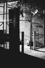 (matei_g) Tags: a7r bland white bw street bushwick nyc new york city high contrast shadows