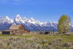 Mormon Row (Thijs de Bruin) Tags: grandteton mormonrow sky mountains barn schuur hek fence bergen sneeuw snow
