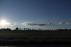 Sonnenuntergang in Westfalen (RadarO´Reilly) Tags: sonnenuntergang sundown sunset horizont horizon bäume trees landschaft landscape himmel sky wolken clouds westfalen westphalia nrw germany