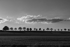 Sonnenuntergang in Westfalen (RadarO´Reilly) Tags: sonnenuntergang sundown sunset horizont horizon bäume trees landschaft landscape himmel sky wolken clouds westfalen westphalia nrw germany sw schwarzweis bw blackwhite blanconegro monochrome noiretblanc zwartwit