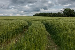 The parting of the ways (James Waghorn) Tags: thurnham spring tree maidstone sonyrx100m3 clouds kent field northdowns england sony rx100 lines moody crop arable agriculture