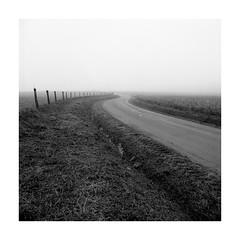 (Oeil de chat) Tags: nb bw monochrome film pellicule argentique mf 120 carré moyenformat mediumformat fuji acros bronica s2 komura brouillard vide route minimalisme campagne