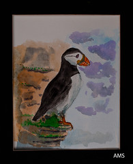 Puffin (A>M>S) Tags: ams watercolour puffin bird painting