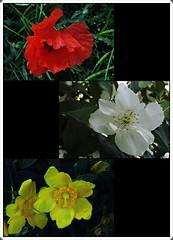 1 - Spring colors (melina1965) Tags: panasonic lumix dmctz57 îledefrance valdemarne juin june 2019 créteil mosaïque mosaïques mosaic mosaics collages collage macro macros printemps spring fleur fleurs flower flowers