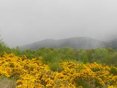 Hail Shower, Gorthleck, Stratherrick, May 2019 (allanmaciver) Tags: gorthleck gorse bloom grey skies stratherrick scotland special atmosphere allanmaciver
