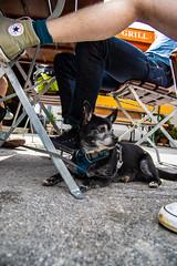 AMFD3460 (amfdesign.de) Tags: 2019 bearbeitet pentaxk3ii smcpentaxda1650mmf2 8edalifsdm schliersee see bayern bavaria deutschland de natur hund dog pet tier