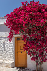 Bougainvillea Sifnos (josullivan.59) Tags: 2019 agean artistic europe greece greek sifnos cyclades door flowers house island islands light orange red texture travel wallpaper white outdoor outside day detail june clear